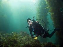 Taucher, der die Kamera in Catalina untersucht Stockfotos