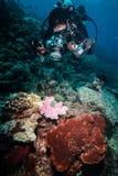 Taucher, der Foto von Korallenriffen in Derawan, Unterwasserfoto Kalimantan, Indonesien macht Lizenzfreie Stockbilder