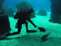 Taucher in der Seewelt, Unterwasserriff Lizenzfreie Stockbilder