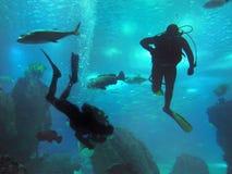 Taucher in der Seewelt, Unterwasserriff Lizenzfreies Stockfoto