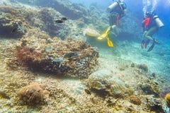 Taucher, die am Korallenriff mit Meeresschildkröte und verschiedenen Fischen tauchen Stockfotos