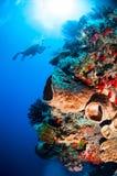 Taucher, Fassschwamm, Federsterne, schwarze Sonnenkoralle in Banda, Indonesien-Unterwasserfoto Lizenzfreie Stockfotos