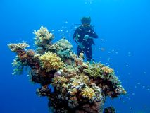 Taucher hinter Koralle Stockbilder