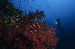 Taucher mit bunten Korallen Stockbilder