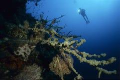 Taucher mit bunten Korallen Lizenzfreie Stockfotografie