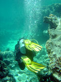 Taucher mit Koralle Stockfoto