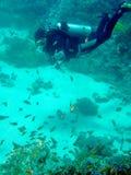 Taucher mit Korallen und Fischen Lizenzfreie Stockfotos