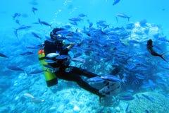 Taucher mit Masse der Fische. Stockbilder