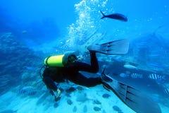 Taucher mit Masse der Fische. Lizenzfreie Stockbilder
