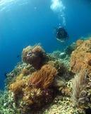 Taucher mit schönen Korallen Stockbild