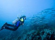 Taucher und Barracuda Lizenzfreies Stockbild