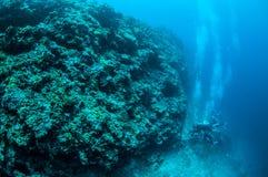 Taucher und die meno Wand in Gili, Lombok, Nusa Tenggara Barat, Indonesien-Unterwasserfoto Stockfoto