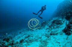 Taucher- und Drahtkoralle in Gili, Lombok, Nusa Tenggara Barat, Indonesien-Unterwasserfoto Stockfotografie