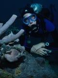 Taucher und Frogfish lizenzfreies stockfoto