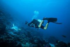 Taucher und grüne Meeresschildkröteschwimmen in Derawan, Unterwasserfoto Kalimantan, Indonesien Lizenzfreie Stockfotos