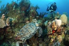 Taucher und hawksbill Seeschildkröte. Stockfotografie