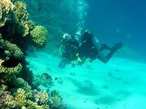 Taucher und Koralle Stockfotografie