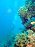 Taucher und Koralle Stockfotos