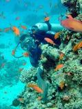 Taucher und Koralle Stockbild