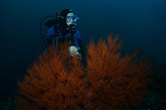 Taucher und Koralle stockfoto