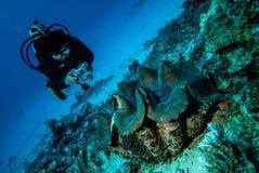 Taucher und riesige Klammer n Derawan, Unterwasserfoto Kalimantan, Indonesien Stockbilder
