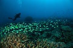 Taucher und Schulungsfische über den Korallenriffen in Gili, Lombok, Nusa Tenggara Barat, Indonesien-Unterwasserfoto Stockbilder
