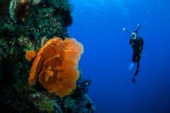 Taucher und Seefächer Melithaea in Banda, Indonesien-Unterwasserfoto Lizenzfreie Stockfotografie