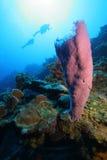 Taucher und tropisches Korallenriff Stockfotos