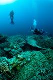 Taucher und verschiedene harte Korallenriffe in Banda, Indonesien-Unterwasserfoto Lizenzfreie Stockfotografie