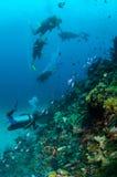 Taucher und verschiedene Korallenriffe in Gili, Lombok, Nusa Tenggara Barat, Indonesien-Unterwasserfoto Lizenzfreies Stockfoto