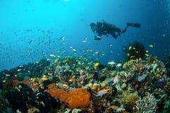 Taucher und verschiedene Rifffische schwimmen über Korallenriffen in Unterwasserfoto Gili Lombok Nusa Tenggara Barats Indonesien Lizenzfreies Stockfoto