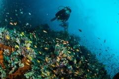 Taucher und verschiedene Rifffische schwimmen über Korallenriffen in Unterwasserfoto Gili Lombok Nusa Tenggara Barats Indonesien Stockfotos