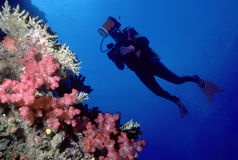 Taucher und weiche korallenrote Wand Lizenzfreies Stockbild