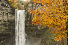 Taughannock Falls and Orange Maple Stock Image