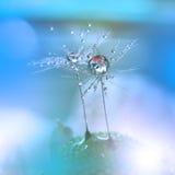Taunasser Löwenzahnblumenabschluß oben Stockfotos