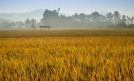 Taunasser Reis Stockbild
