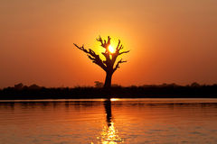 Taungthaman sjö i Amarapura, Myanmar Royaltyfri Fotografi
