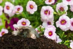 Trou de rongeur dans le jardin photographie stock libre de for Taupe dans le jardin