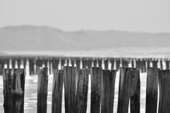Énormément de taupe Photos libres de droits