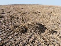 Taupes dans le domaine et le sillage de la nature dans le climat de steppe et le climat de steppe, l'amour de la nature, la vue d Images stock