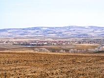 Taupes dans le domaine et le sillage de la nature dans le climat de steppe et le climat de steppe, l'amour de la nature, la vue d Image stock