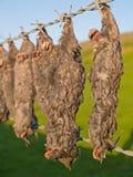 Taupes mortes accrochant sur la barrière de barbelé Image stock