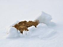 Taupinière dans la neige Photo libre de droits