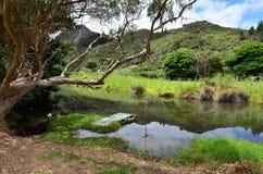 Taupo Bay - New Zealand Royalty Free Stock Photos