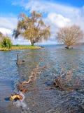 Taupo van het meer Royalty-vrije Stock Fotografie