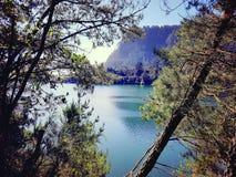 Tauranga new zealand. River Royalty Free Stock Image