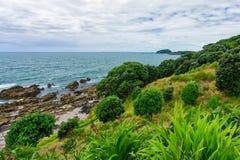 Tauranga, Nuova Zelanda - 15 gennaio 2018: Formazione rocciosa in Moun Fotografie Stock Libere da Diritti