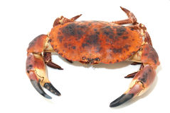 Taurean crab Royalty Free Stock Images