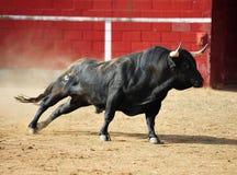 Taureau espagnol Photographie stock libre de droits
