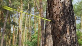 Taureau est oeil La flèche a frappé l'arbre banque de vidéos